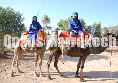Dromadaire Marrakech